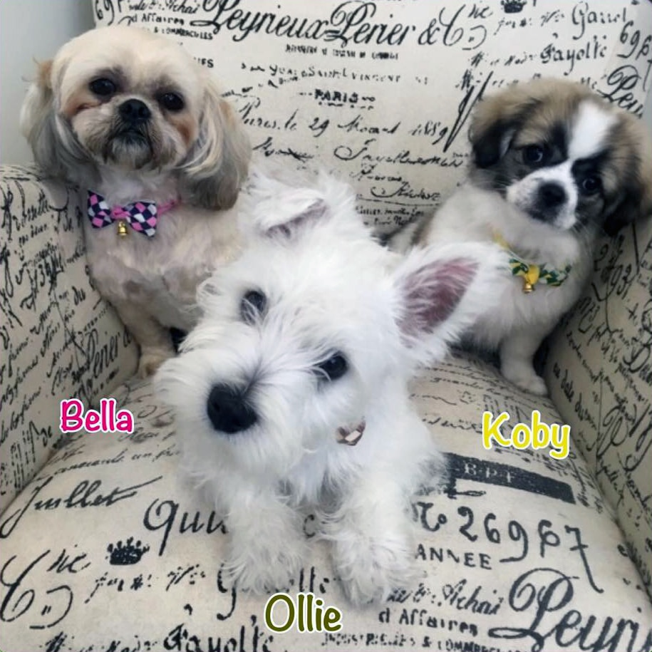 Bella Koby Ollie Stylin Dogs Clients