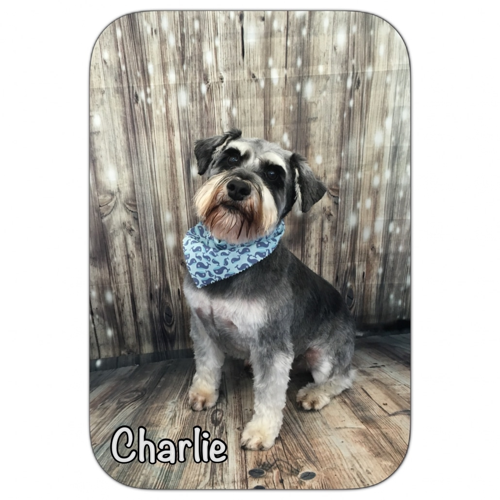 Charlie Stylin' Dogs Dog Grooming Client
