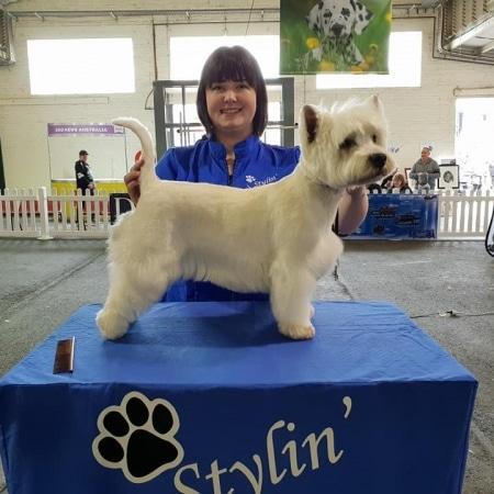 Candace Winning Dog Grooming Award Terrier