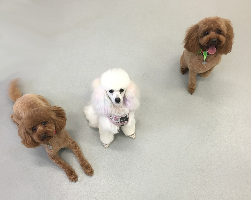 Stylin' Dogs Dog Grooming Clients