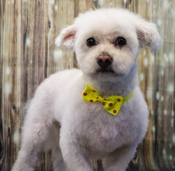 Stylin' Dogs Dog Grooming Client